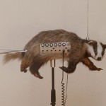 The Badgermin- half badger, half theremin